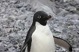 Cruise Holiday to Antarctica